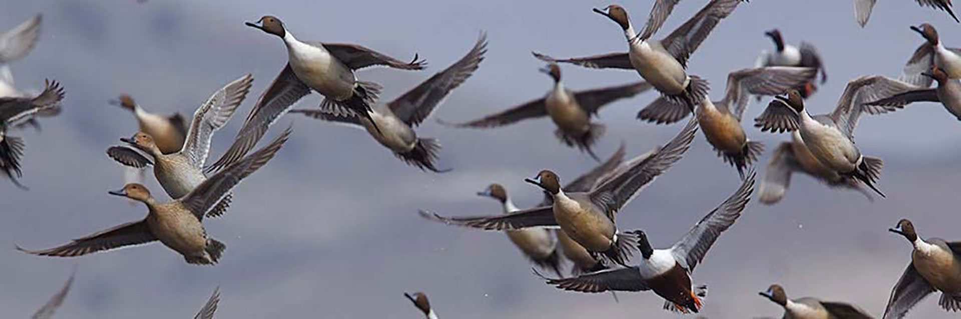 Kansas Waterfowl Hunts | Guided Waterfowl Hunts
