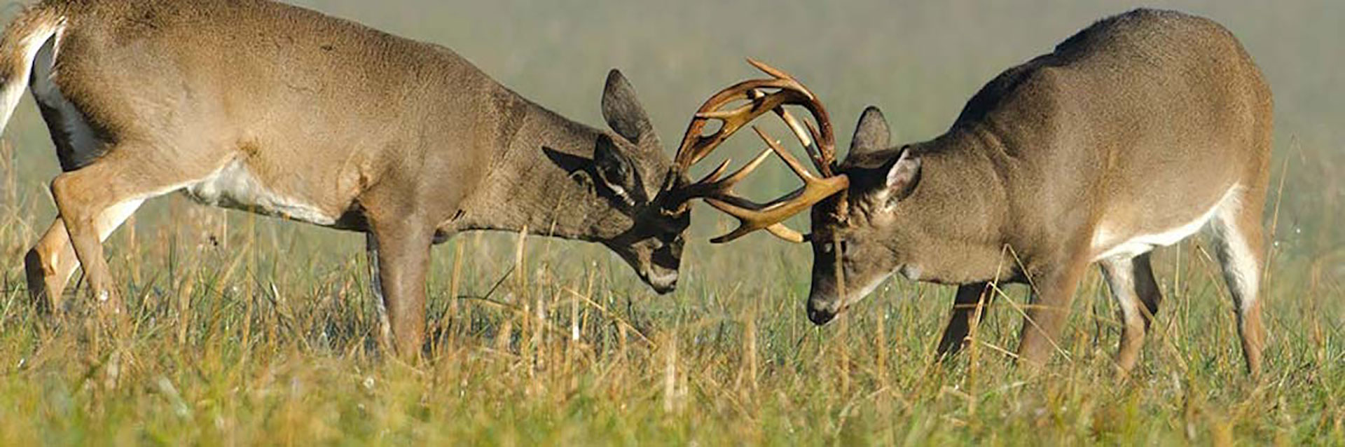 Kansas Whitetail Deer Hunting Outfitters