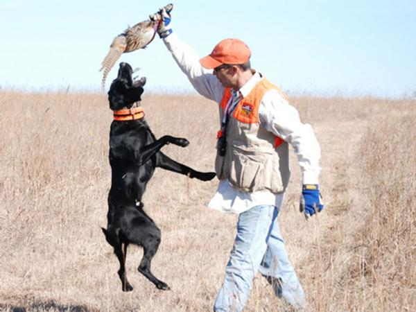 Hunting Dogs Available