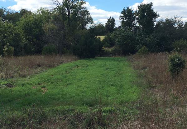 Food Plots Kansas NCK Outfitters